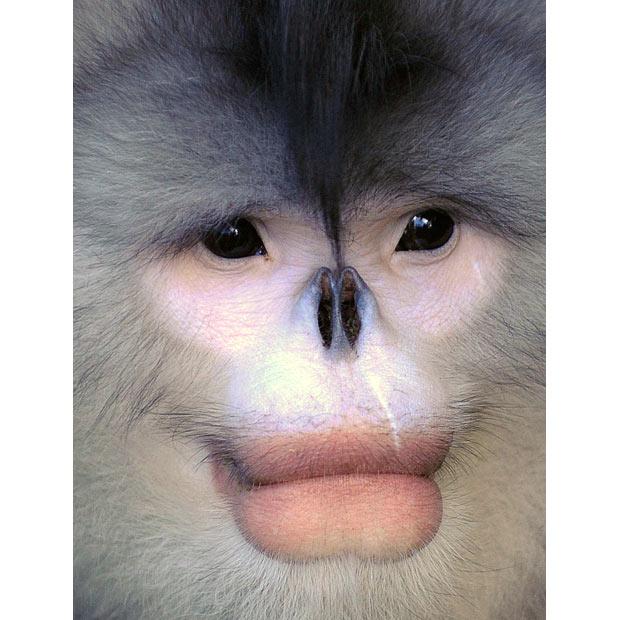 monkey-lips_1508150i